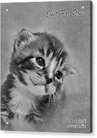 Kitten Just For You Acrylic Print by Terri Waters