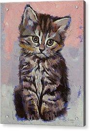 Kitten Acrylic Print by Michael Creese
