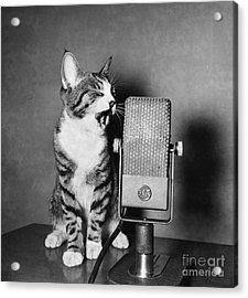Kitten On The Radio Acrylic Print by Syd Greenberg