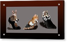 Kittens In Designer Ladies Shoes Acrylic Print by Regina Femrite