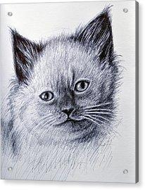 Kitty Acrylic Print by Rick Hansen