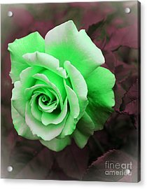 Kiwi Lime Rose Acrylic Print by Barbara Griffin