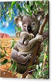Koala And Cub Acrylic Print by Adrian Chesterman