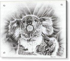Koala Roto Princess Acrylic Print by Remrov Vormer