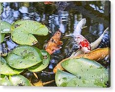 Koi And Lily Pad Acrylic Print by Jamie Pham