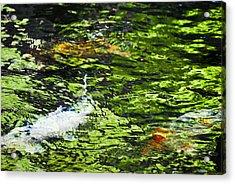 Koi Pond Acrylic Print by Christi Kraft