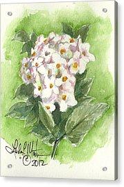 Korean Balm Acrylic Print by Linda L Martin