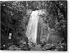 La Coca Falls El Yunque National Rainforest Puerto Rico Print Black And White Acrylic Print by Shawn O'Brien