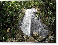 La Coca Falls El Yunque National Rainforest Puerto Rico Print Acrylic Print by Shawn O'Brien