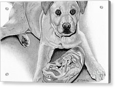 Sneaker Snatcher- Labrador And Chow Chowx Mix Acrylic Print by Sarah Batalka
