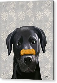 Labrador Black With Bone On Nose Acrylic Print by Kelly McLaughlan