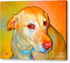 Labrador Painting Acrylic Print by Iain McDonald