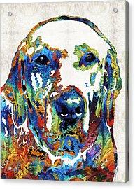 Labrador Retriever Art - Play With Me - By Sharon Cummings Acrylic Print by Sharon Cummings