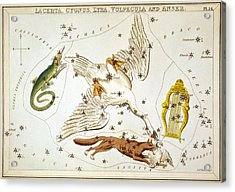 Lacerta Cygnus Lyra Vulpecula And Anser Acrylic Print by Celestial Images