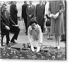 Lady Bird Johnson Planting Acrylic Print by Underwood Archives