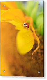 Ladybug Acrylic Print by Rebecca Skinner