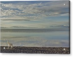 Lake Tahoe March Morning Acrylic Print by Larry Darnell