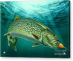 Lake Trout And Spoon Acrylic Print by Jon Q Wright
