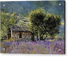 Lala Vanda Acrylic Print by Guido Borelli