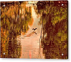 Landing Duck Absrtact Acrylic Print by Leif Sohlman