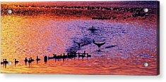 Landing Acrylic Print by Will Boutin Photos