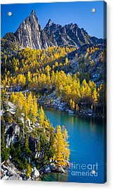 Larches At Perfection Lake Acrylic Print by Inge Johnsson
