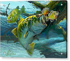 Large Mouth Bass And Blue Gills Acrylic Print by Savlen Art