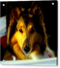 Lassie Come Home Acrylic Print by Karen Wiles
