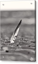 Last Days Of Summer In Black And White Acrylic Print by Sebastian Musial