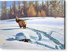 Last Look  -elk Acrylic Print by Paul Krapf