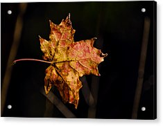 Last Maple Leaf Acrylic Print by LeeAnn McLaneGoetz McLaneGoetzStudioLLCcom