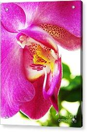 Last Orchid Waves Goodbye Acrylic Print by Judy Via-Wolff