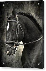 Latcho's Shadow  Acrylic Print by Fran J Scott