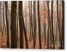 Late Autumn Beech Acrylic Print by Anne Gilbert