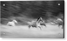 Late For Breakfast Acrylic Print by Dianne Arrigoni