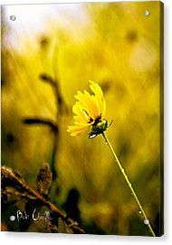 Late Summer Rain From The Forest Floor Acrylic Print by Bob Orsillo