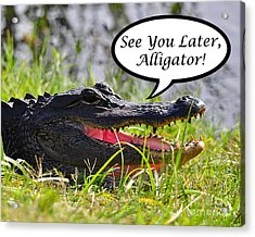 Later Alligator Greeting Card Acrylic Print by Al Powell Photography USA