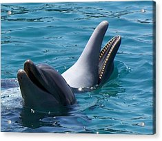 Laughing Dolphins Acrylic Print by Noreen HaCohen