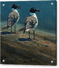 Laughing Gulls Acrylic Print by Aaron Blaise