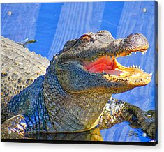 Laughing In The Morning Sun Acrylic Print by Dennis Dugan