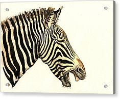 Laughing Zebra Acrylic Print by Juan  Bosco