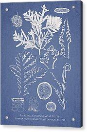 Laurencia Concinna And Hypnea Musciformis Acrylic Print by Aged Pixel