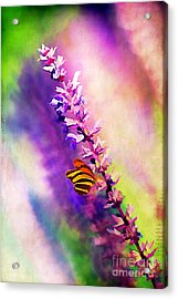 Lavender And Butterlies Acrylic Print by Darren Fisher