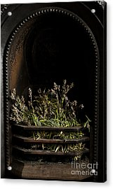 Lavender Fire Acrylic Print by Anne Gilbert