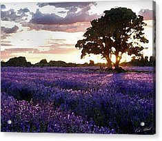 Lavender Sunset Acrylic Print by Cole Black