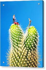 Lawn Mowing On Cactus Acrylic Print by Paul Ge