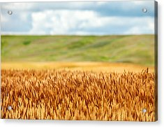 Layers Of Grain Acrylic Print by Todd Klassy