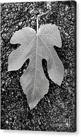 Leaf On Bark Acrylic Print by Andrew Brooks