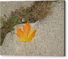 Leaf On Sidewalk Acrylic Print by David Fiske