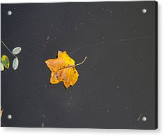 Leaf On Water Study  Acrylic Print by Tim Fitzwater